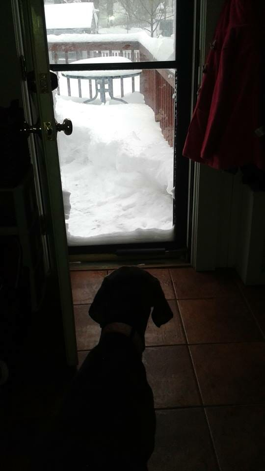 Dog looking at snow