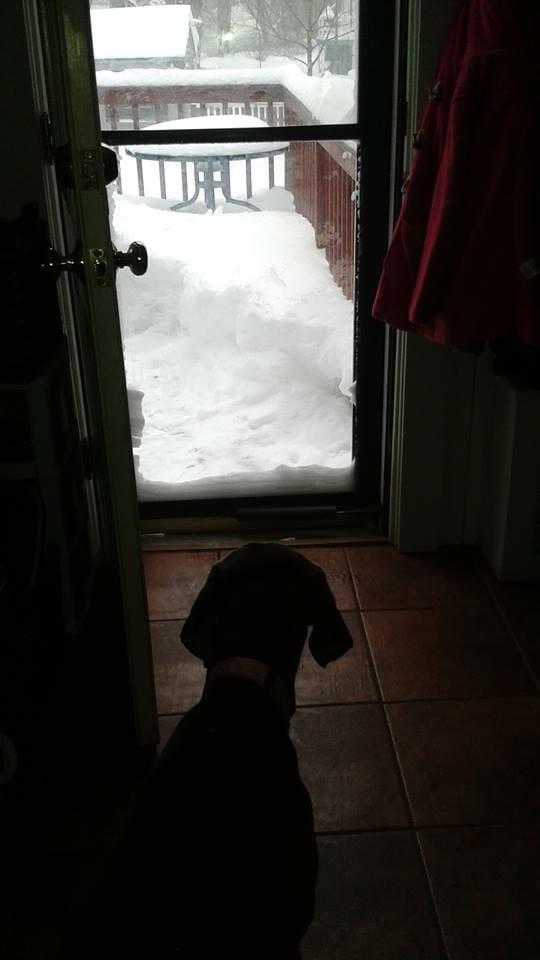 Dog looking at snow